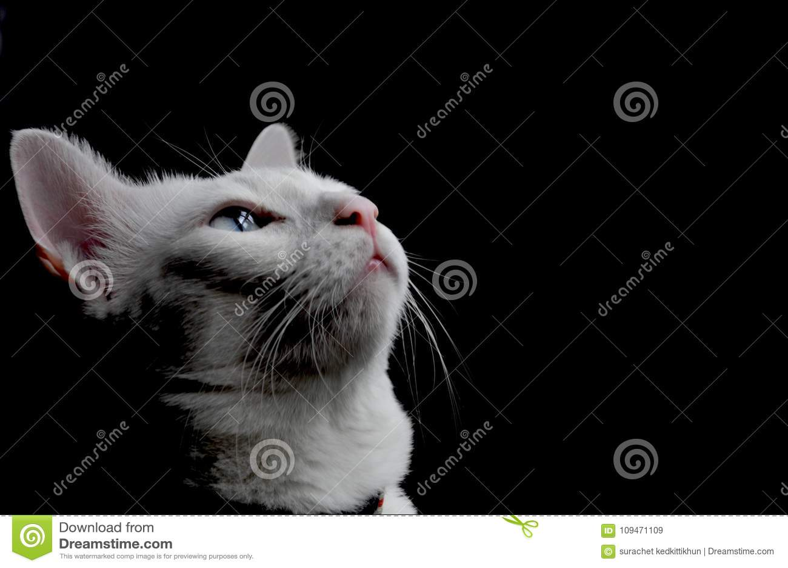 7ec261e01254 Η σιαμέζα γάτα κάθεται στο κρεβάτι και να φανεί έξω παράθυρο