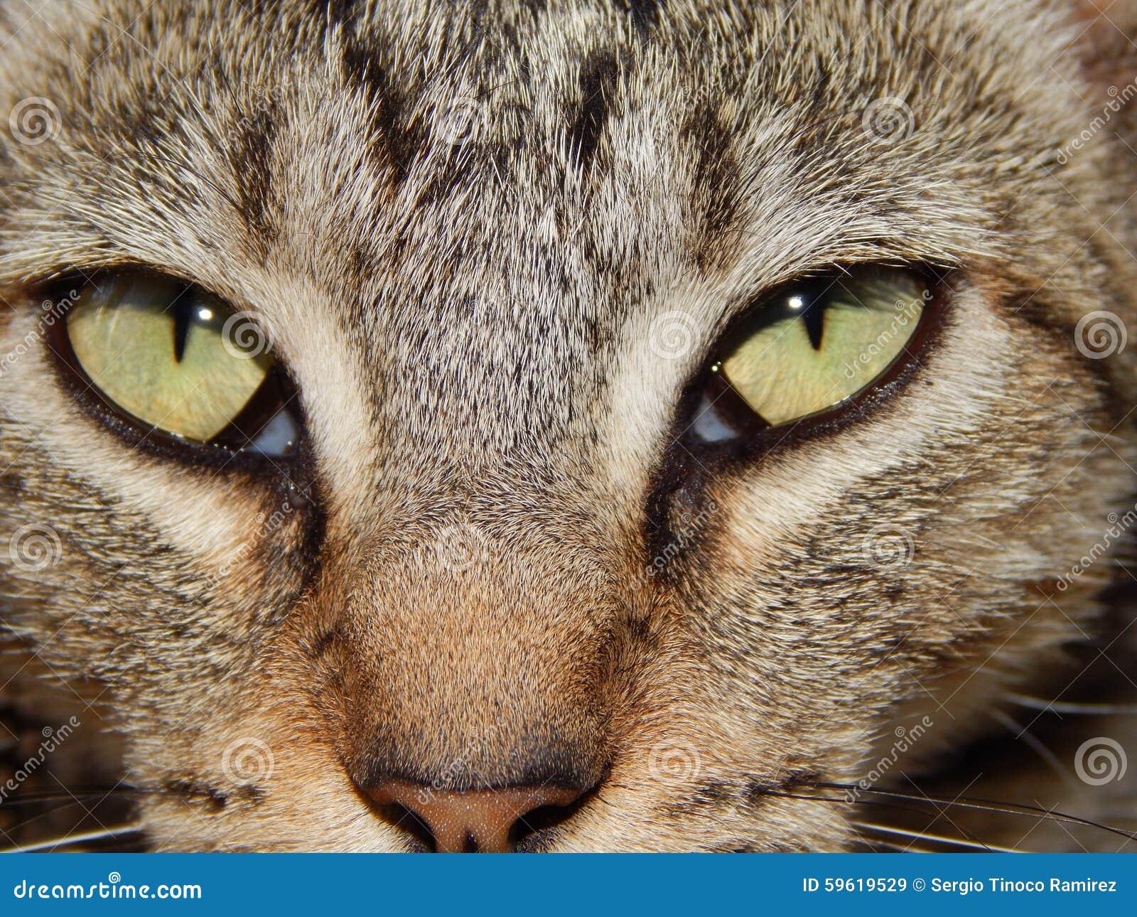 105e0ddc07c7 Αγαπώ τα κατοικίδια ζώα και είμαι πιστός όταν θέλετε και καταδεικνύετε