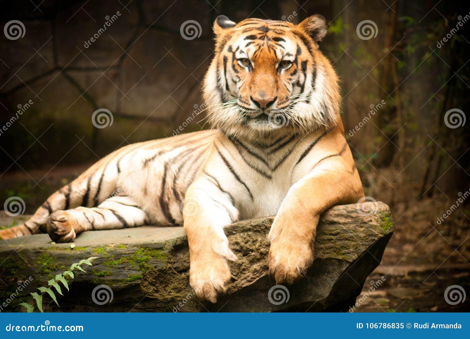Η τίγρη της Βεγγάλης