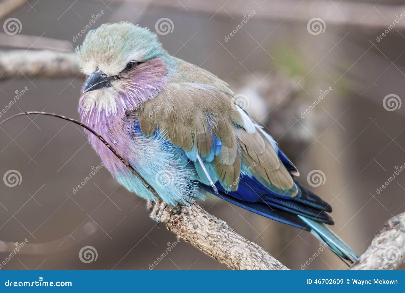 το πουλί μου φωτογραφία φωτογραφίες των μαύρων γυμνό κορίτσια