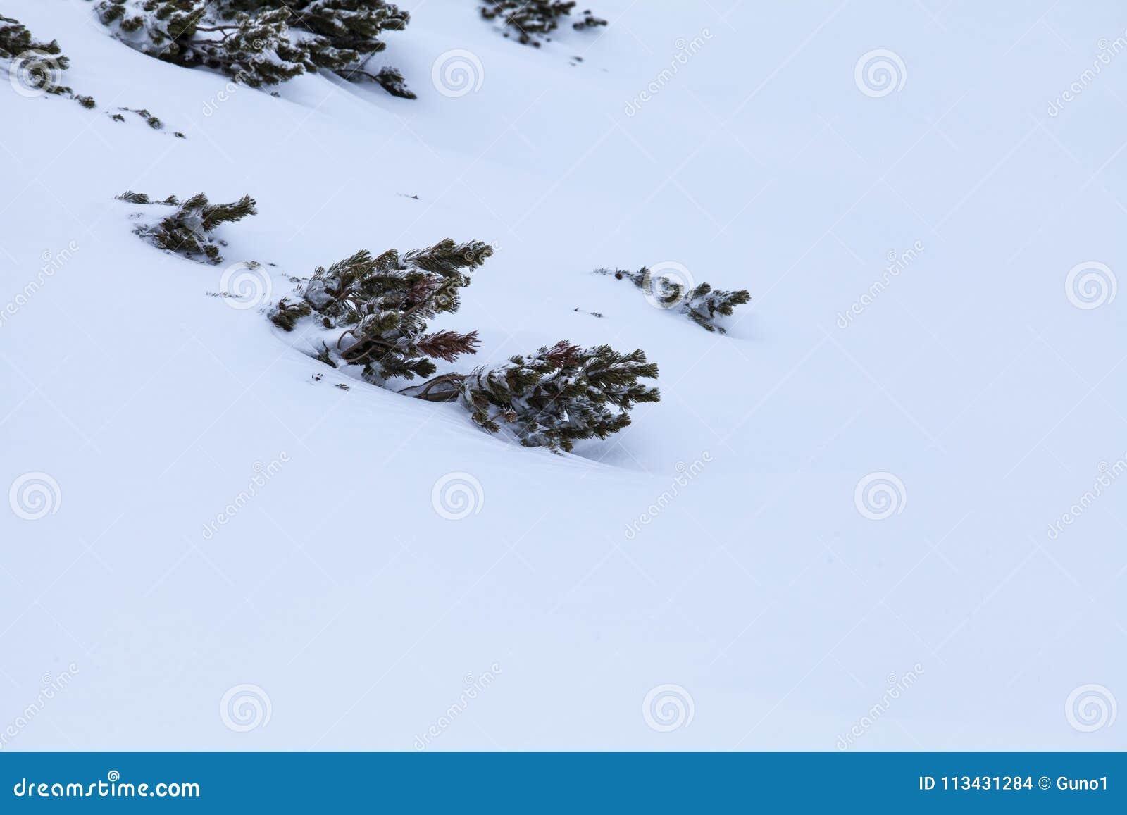 Η φύση των υψηλών βουνών