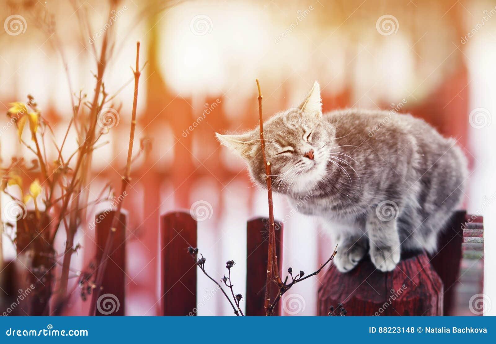 Η χαριτωμένη γάτα εχαΐδευσε στο φράκτη, οι προσοχές του ιδιαίτερες από την ευχαρίστηση