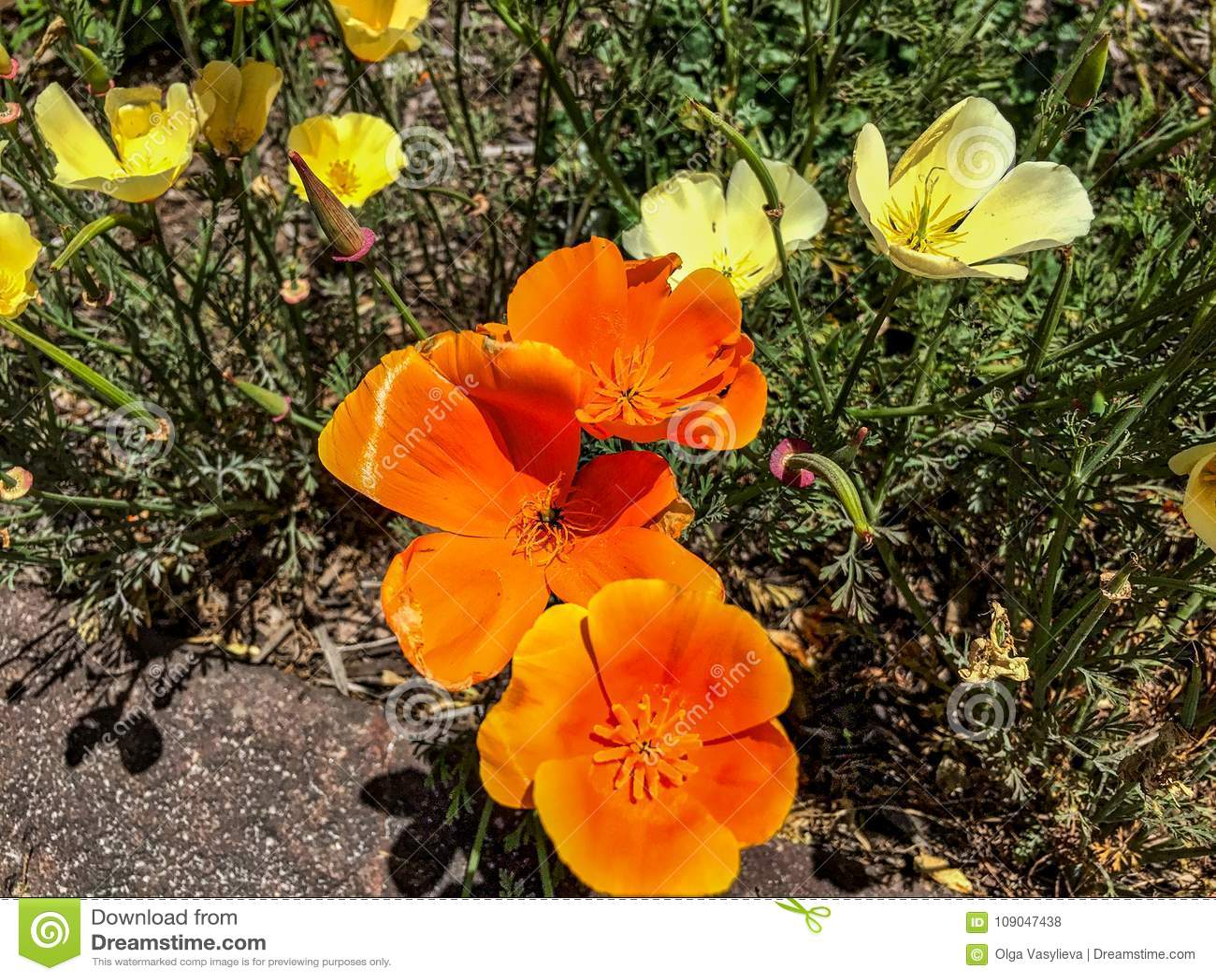 η χρυσή του λουλούβιλ χρονολόγηση τοποθεσίας Self Σύνοψη βοήθεια