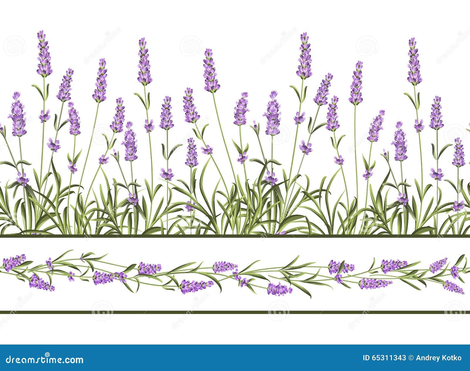 Η Lavender άνευ ραφής γραμμή πλαισίων