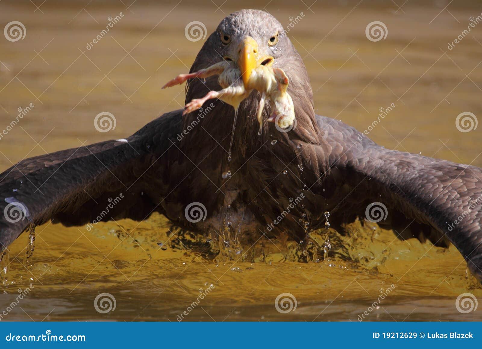 θάλασσα αετών