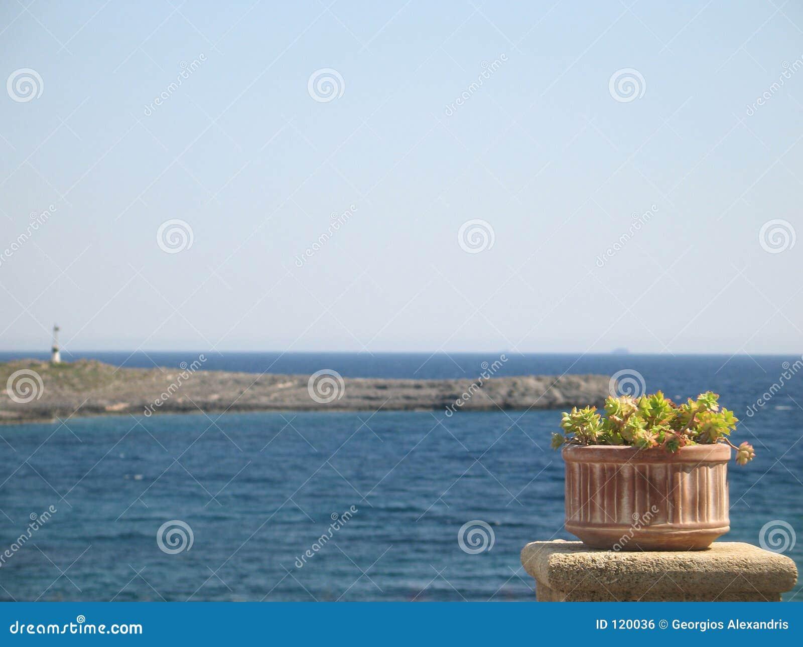 θάλασσα δοχείων λουλουδιών