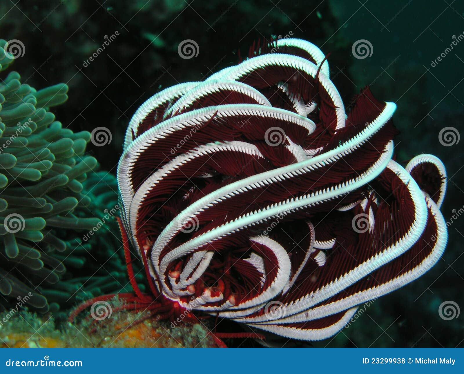 θάλασσα μαλακή Ταϊλάνδη κοραλλιών
