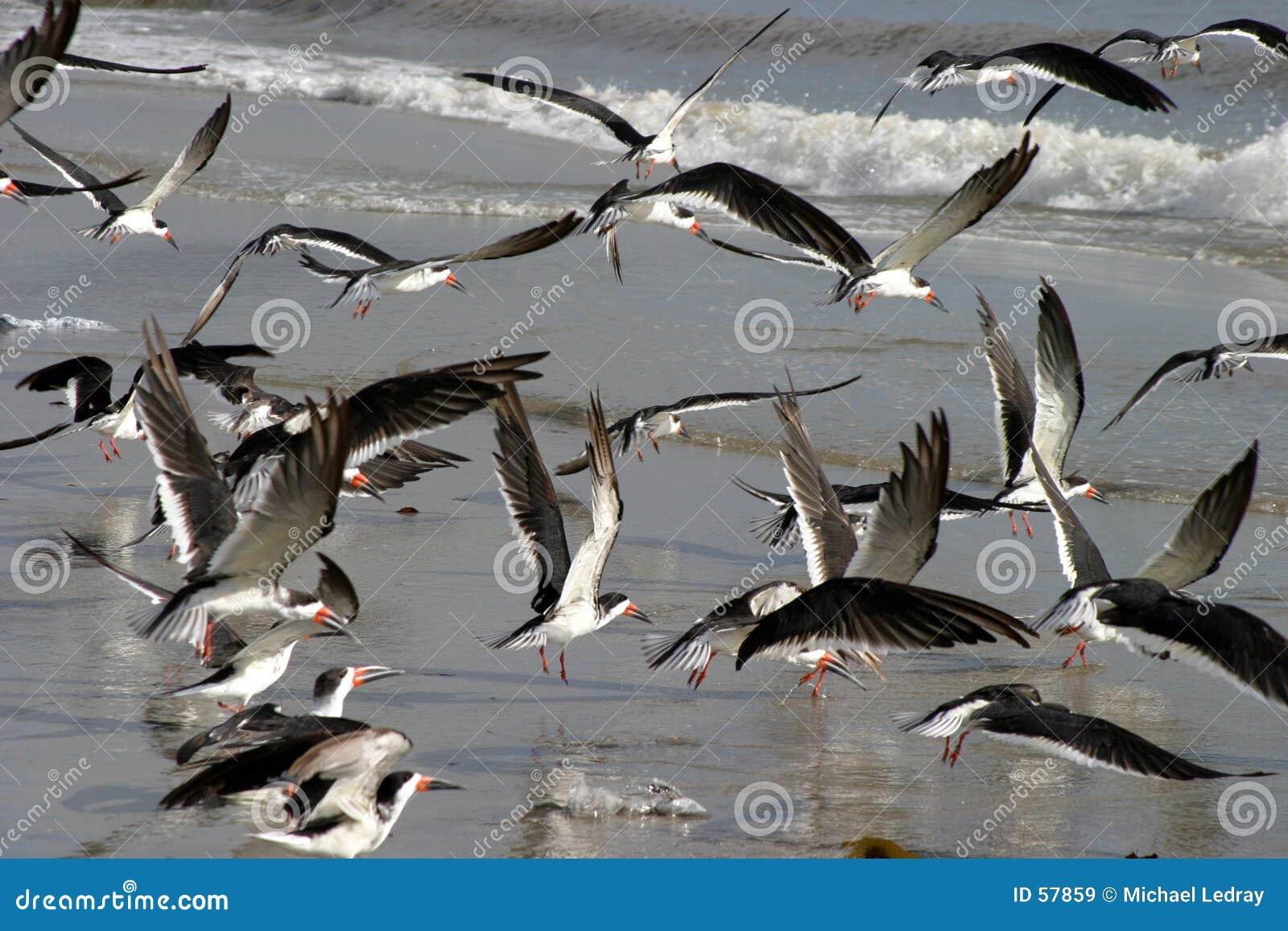 Download θάλασσα πουλιών στοκ εικόνα. εικόνα από ωκεανός, υπαίθρια - 57859