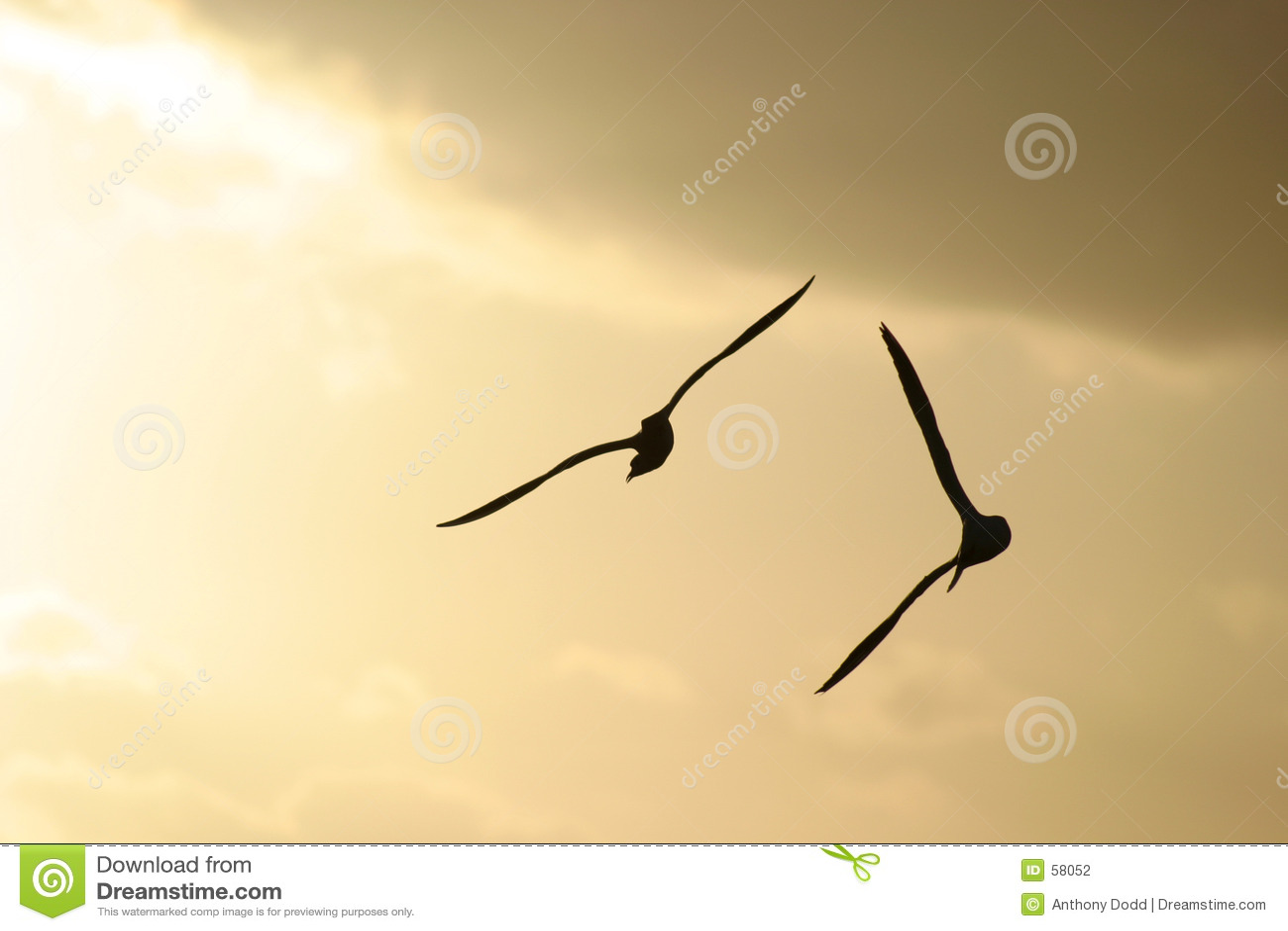 θάλασσα πουλιών