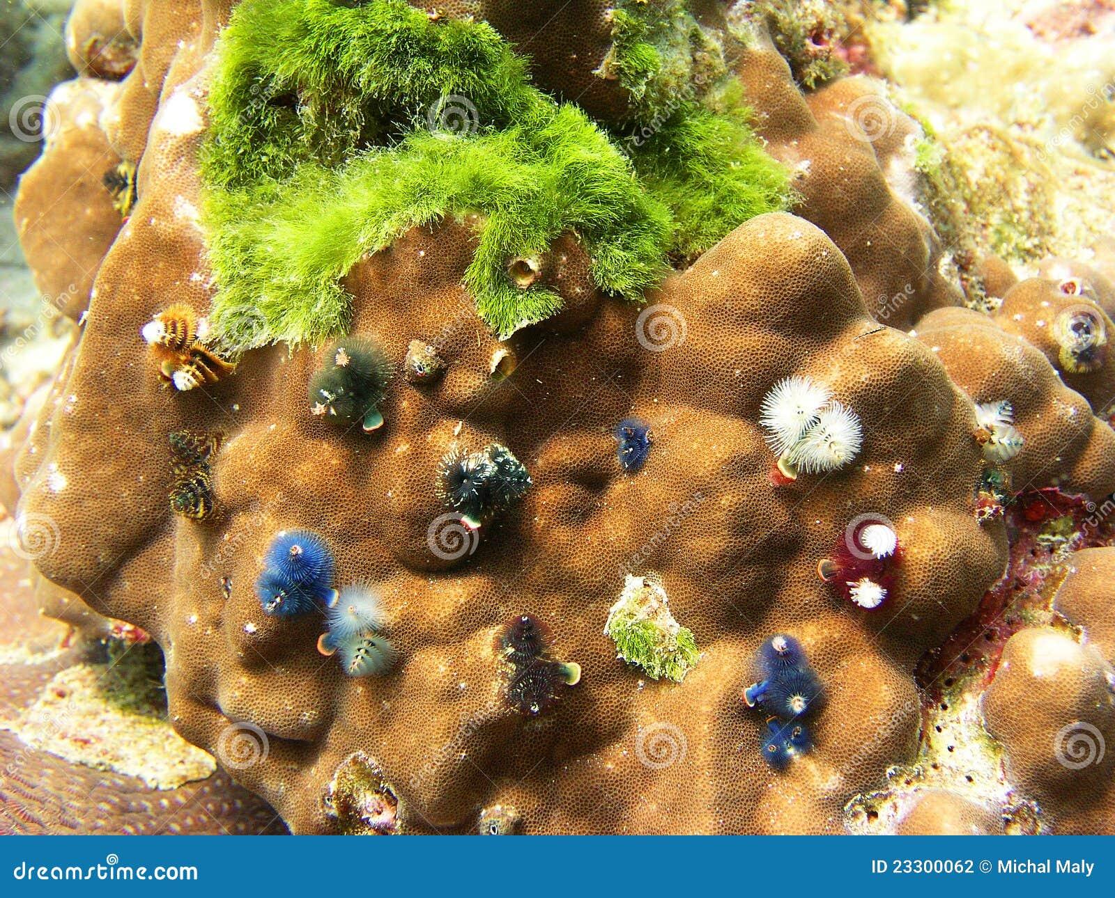 θάλασσα Ταϊλάνδη σκοπέλων ζωής κοραλλιών