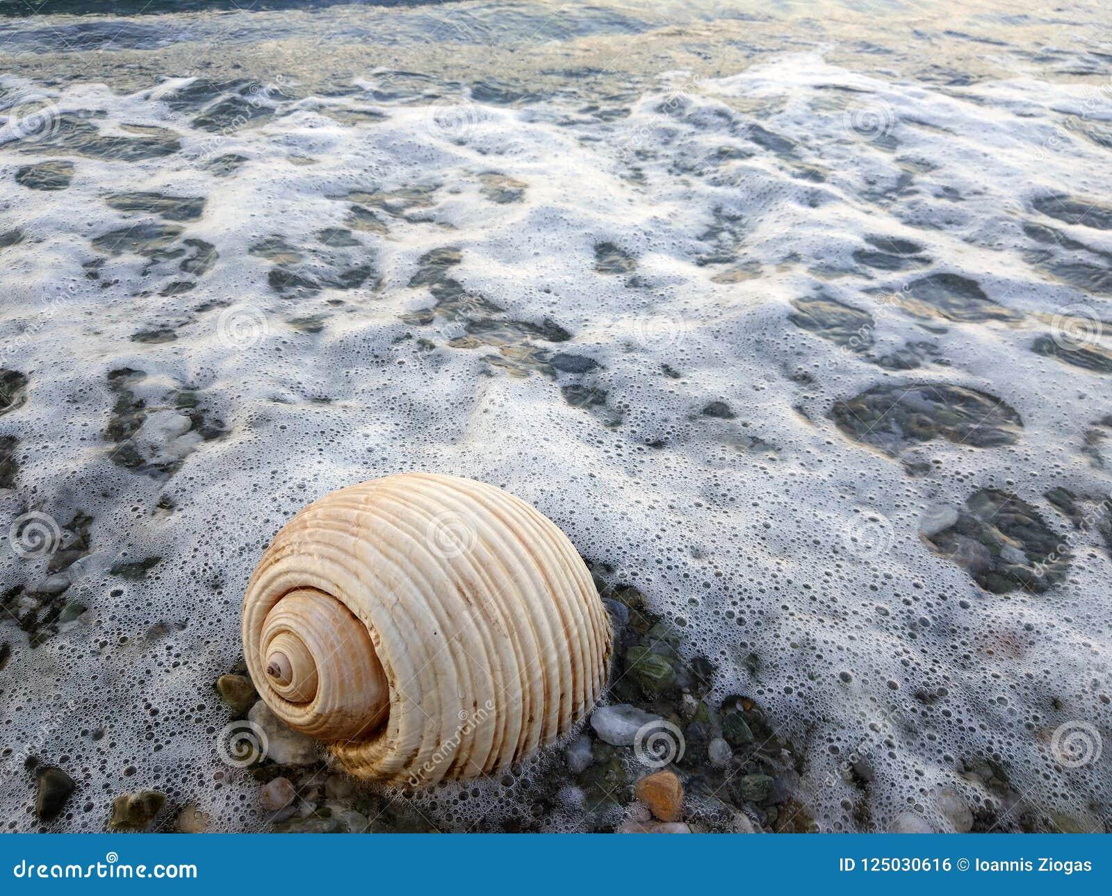 Θάλασσα snale στην ακτή