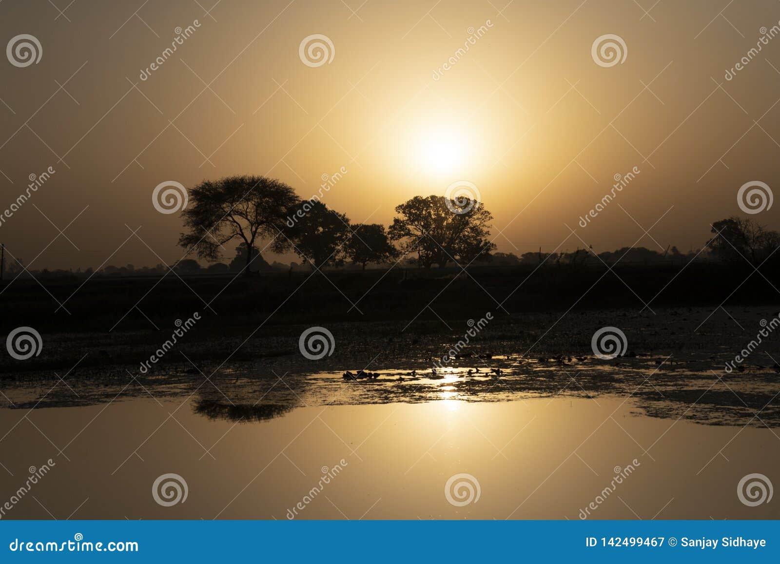 Θέση ανατολής ταπετσαριών σε Indore