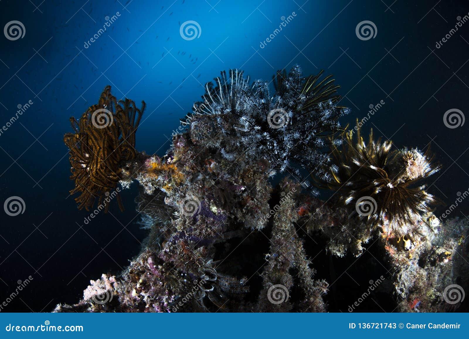 Θαλάσσια υποβρύχια σκηνή ζωής στο σκούρο μπλε υπόβαθρο