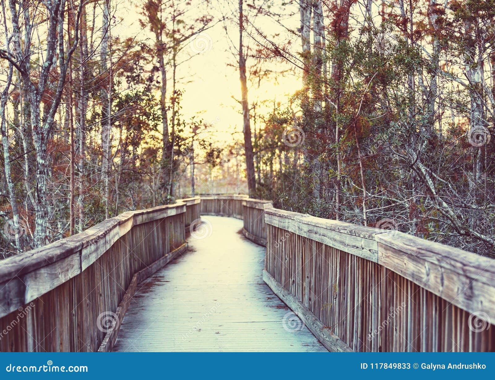Θαλάσσιος περίπατος σε Everglades