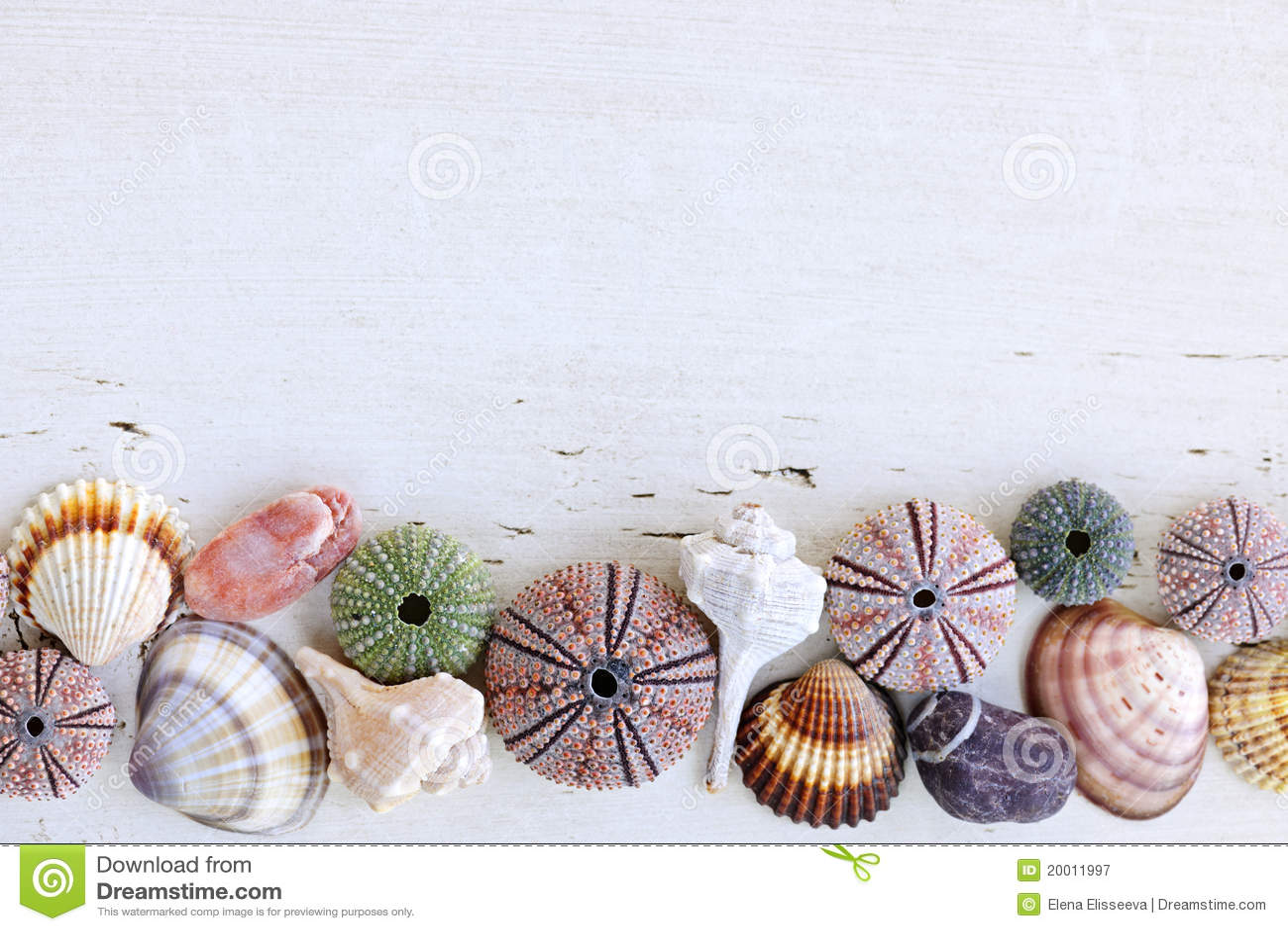 θαλασσινά κοχύλια ανασκ
