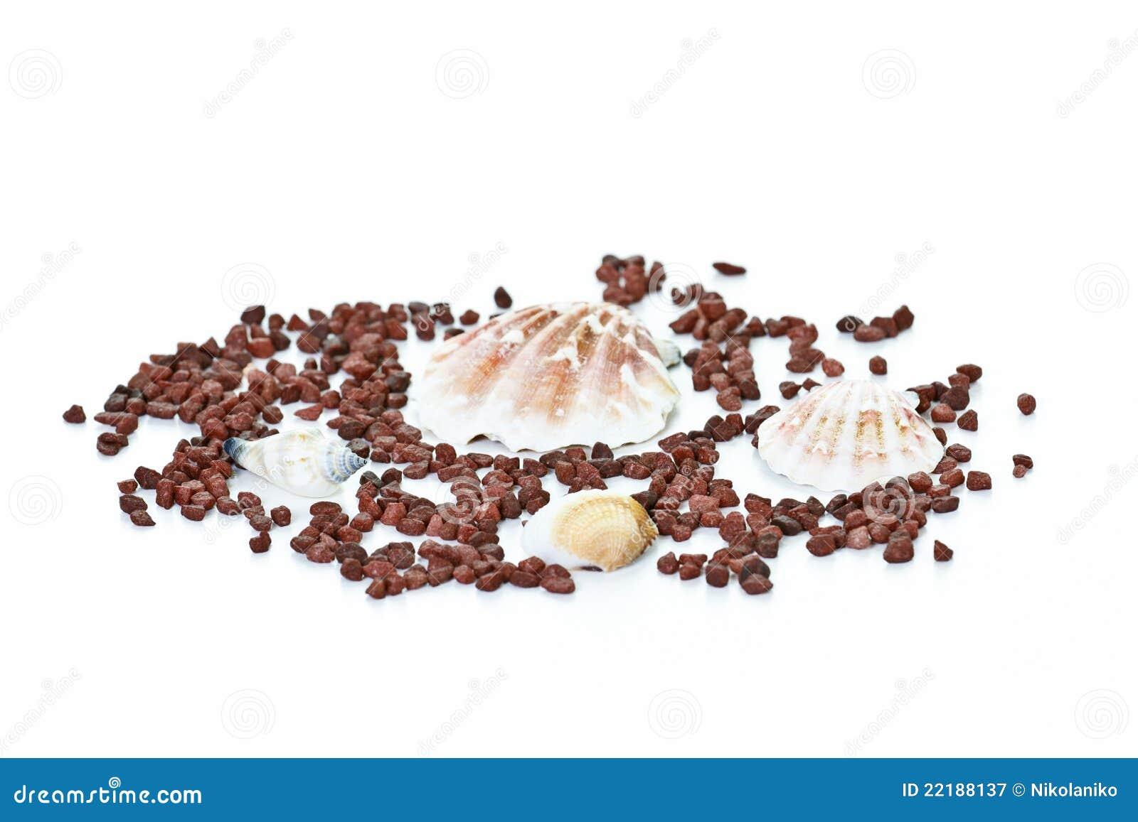 θαλασσινό κοχύλι διακο&s