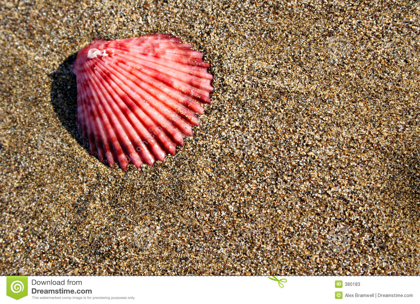 θαλασσινό κοχύλι παραλιών