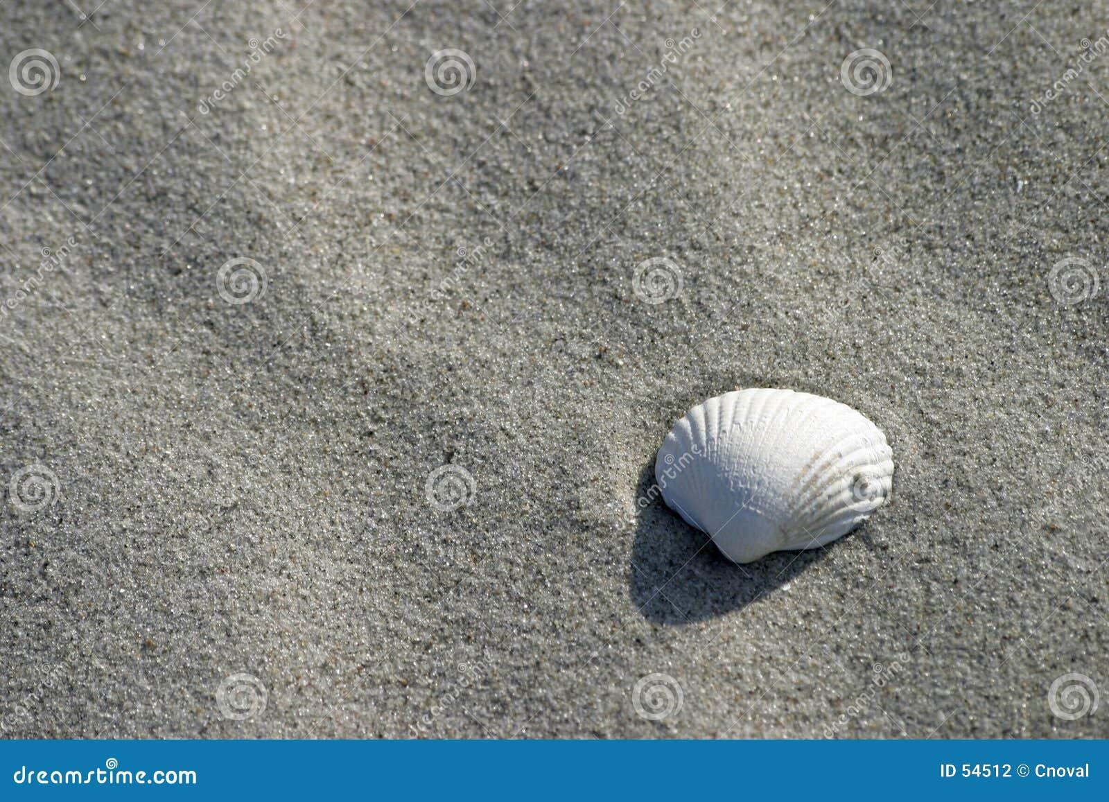 θαλασσινό κοχύλι