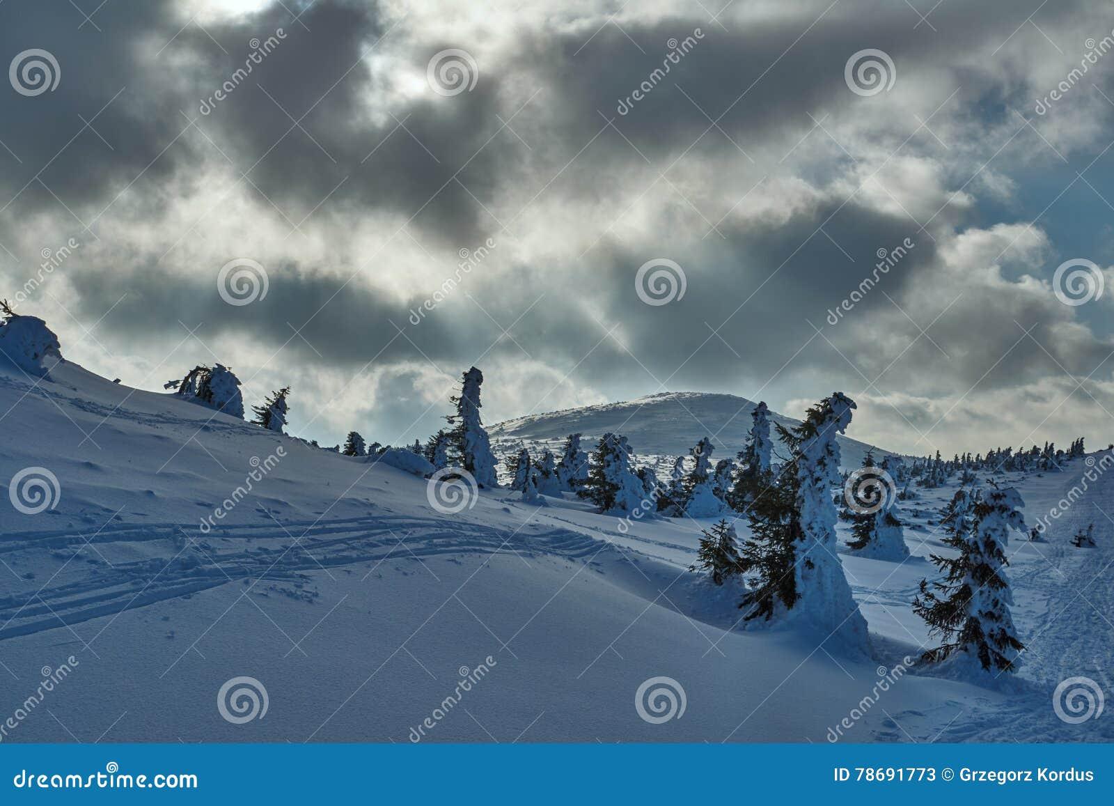 Θαμμένος στο δάσος χιονιού