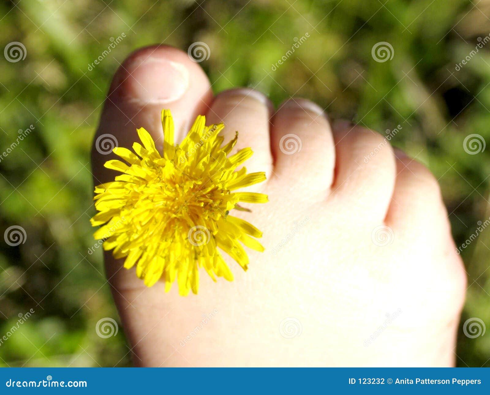 θαυμάσια toe