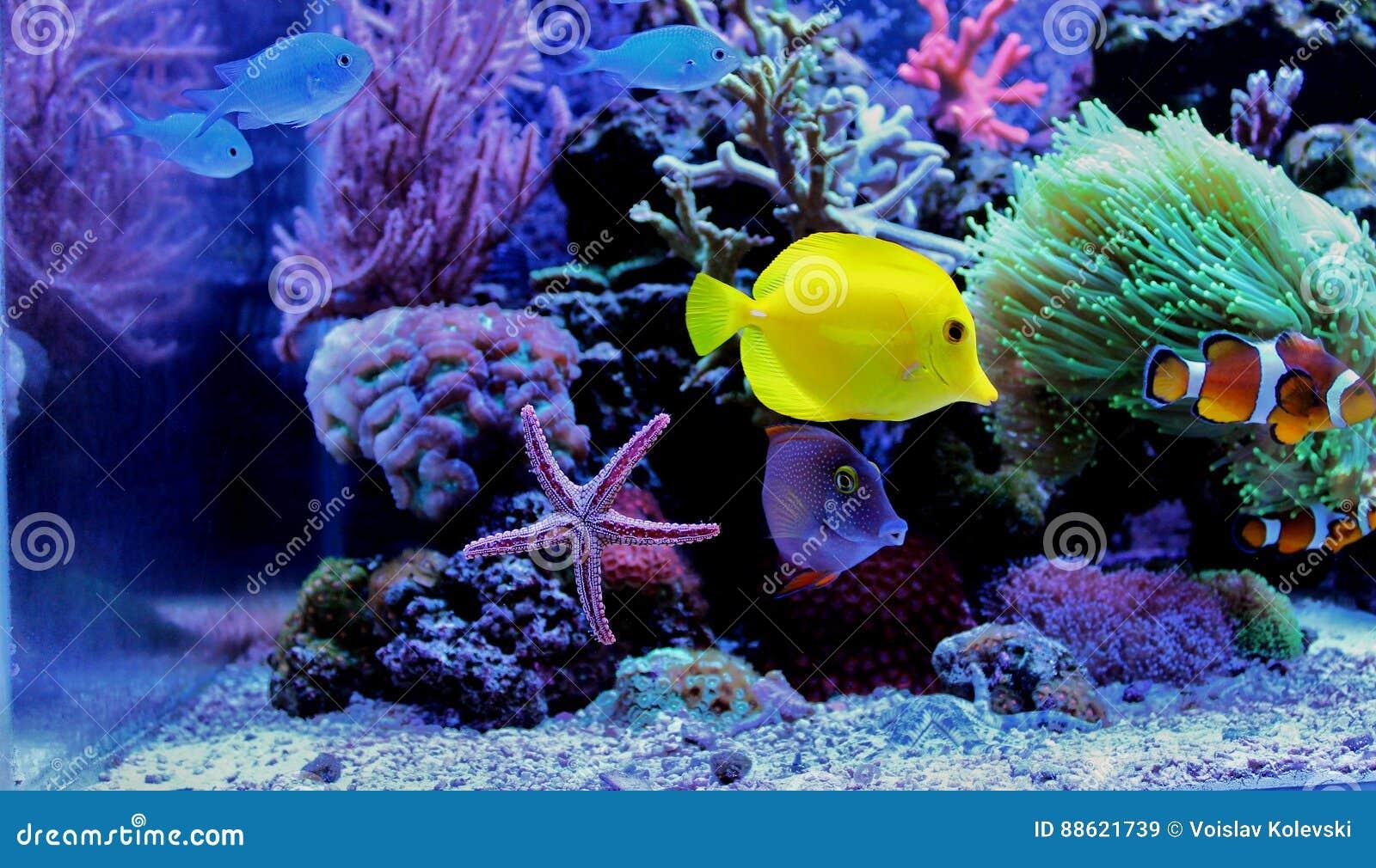 Θαλάσσια ψάρια στο θαλάσσιο ενυδρείο