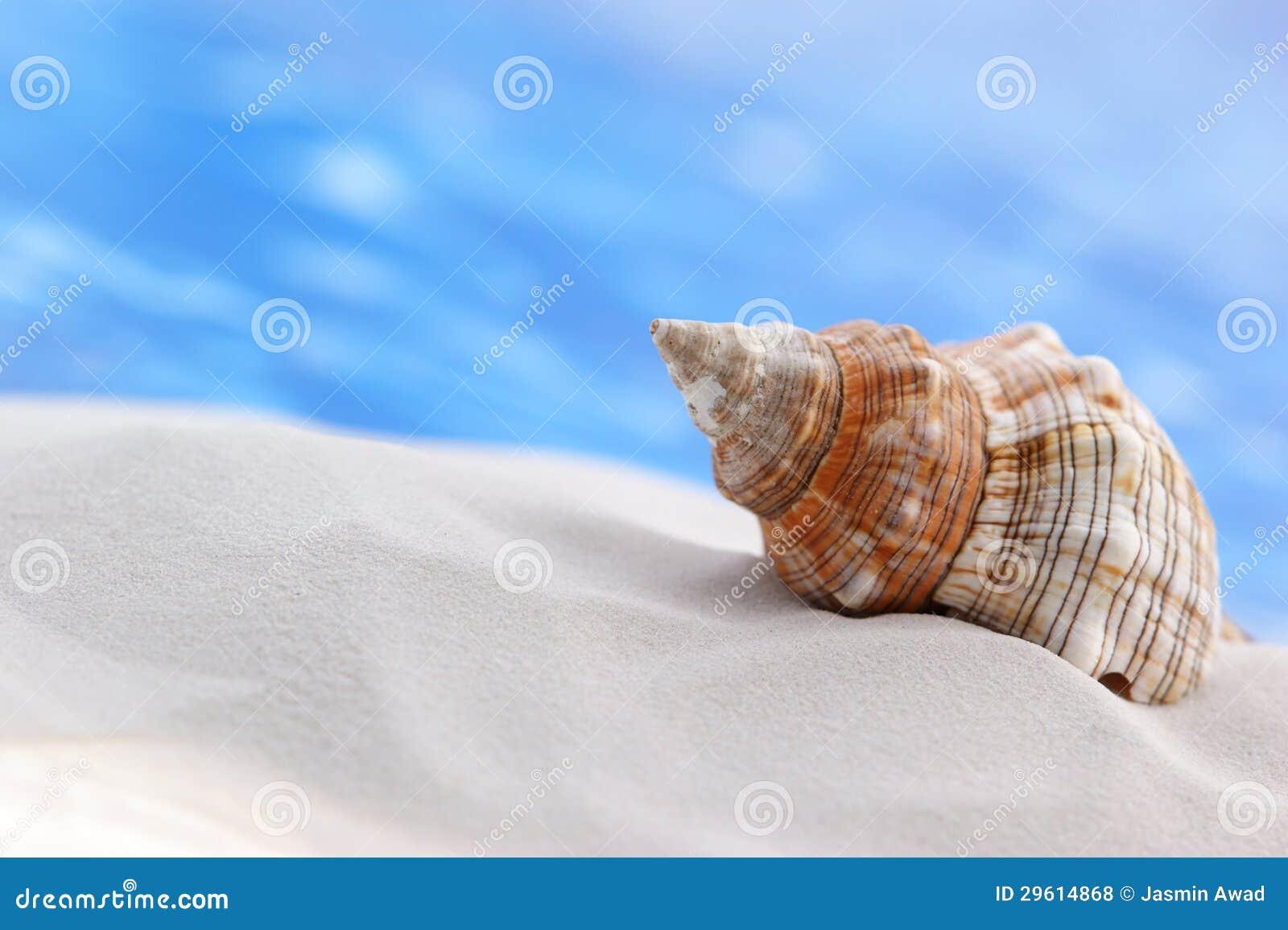 Θαλασσινό κοχύλι στην παραλία