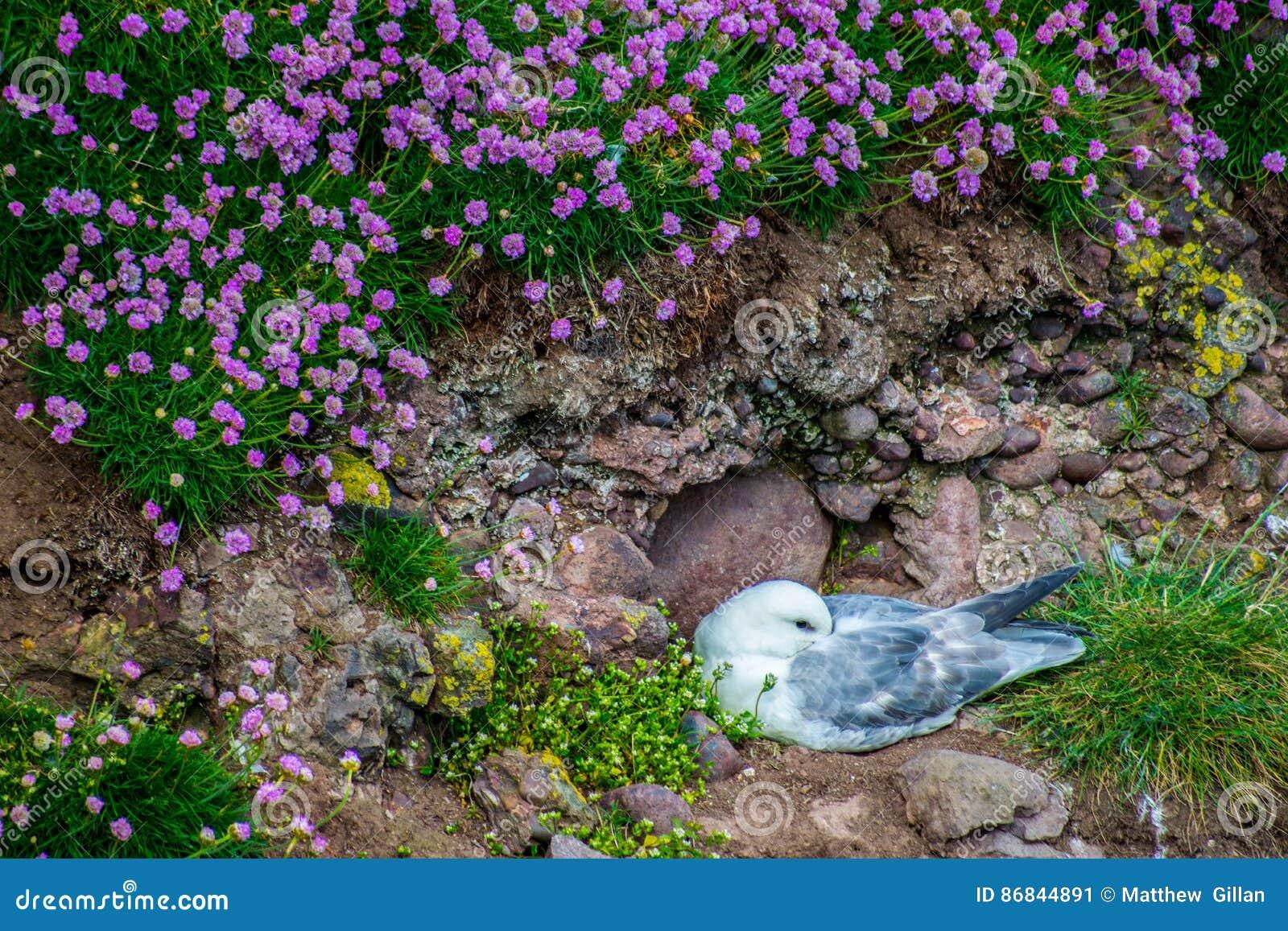 Θαλασσοπούλια στους απότομους βράχους