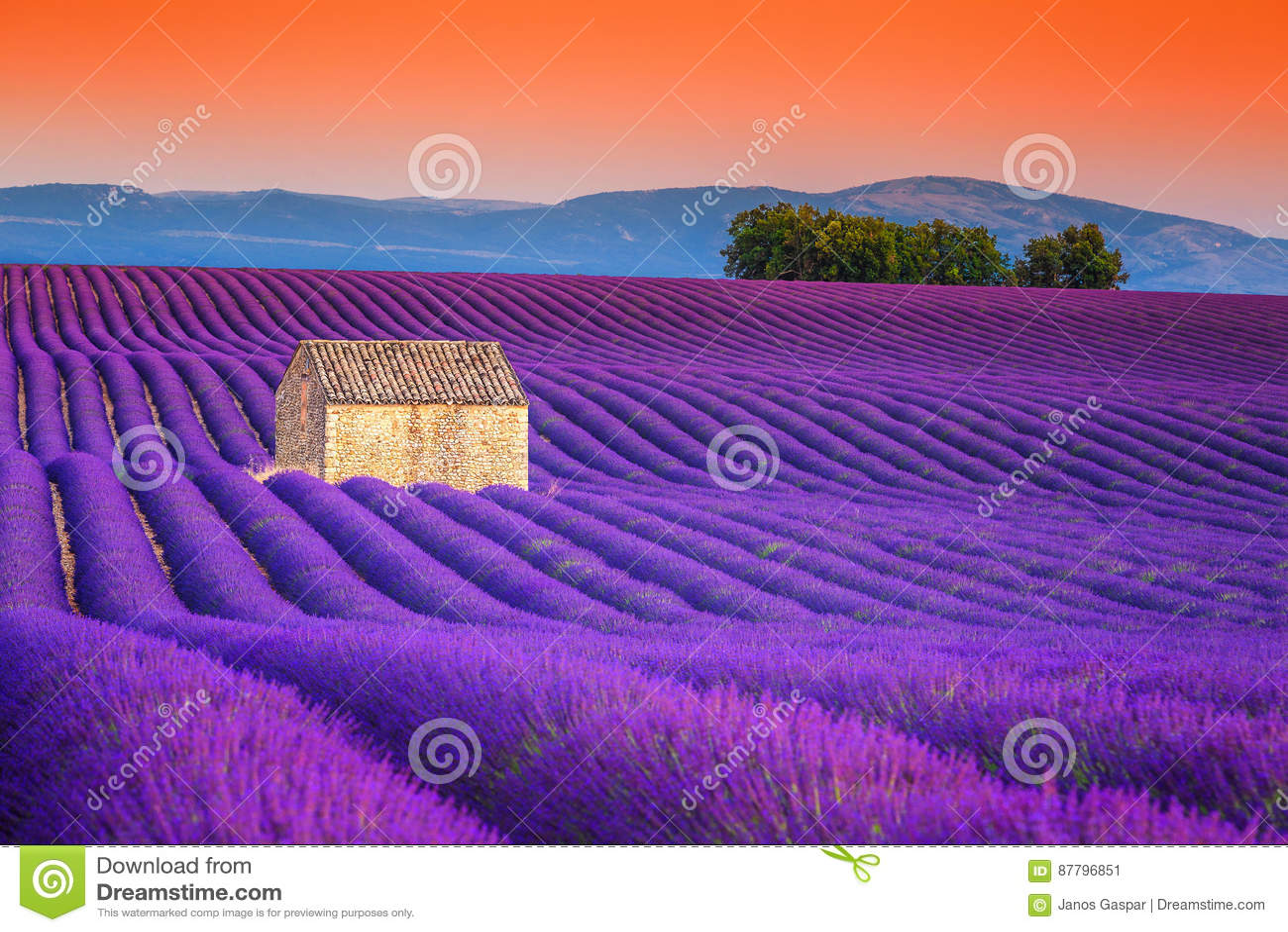 Θεαματικοί lavender τομείς στην Προβηγκία, Valensole, Γαλλία, Ευρώπη