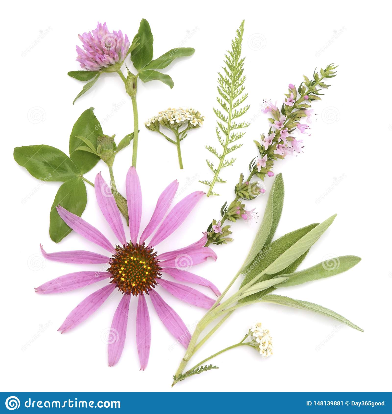 Θεραπεύοντας χορτάρια Ανθοδέσμη ιατρικών εγκαταστάσεων και λουλουδιών του echinacea, τριφύλλι, yarrow, hyssop, φασκομηλιά