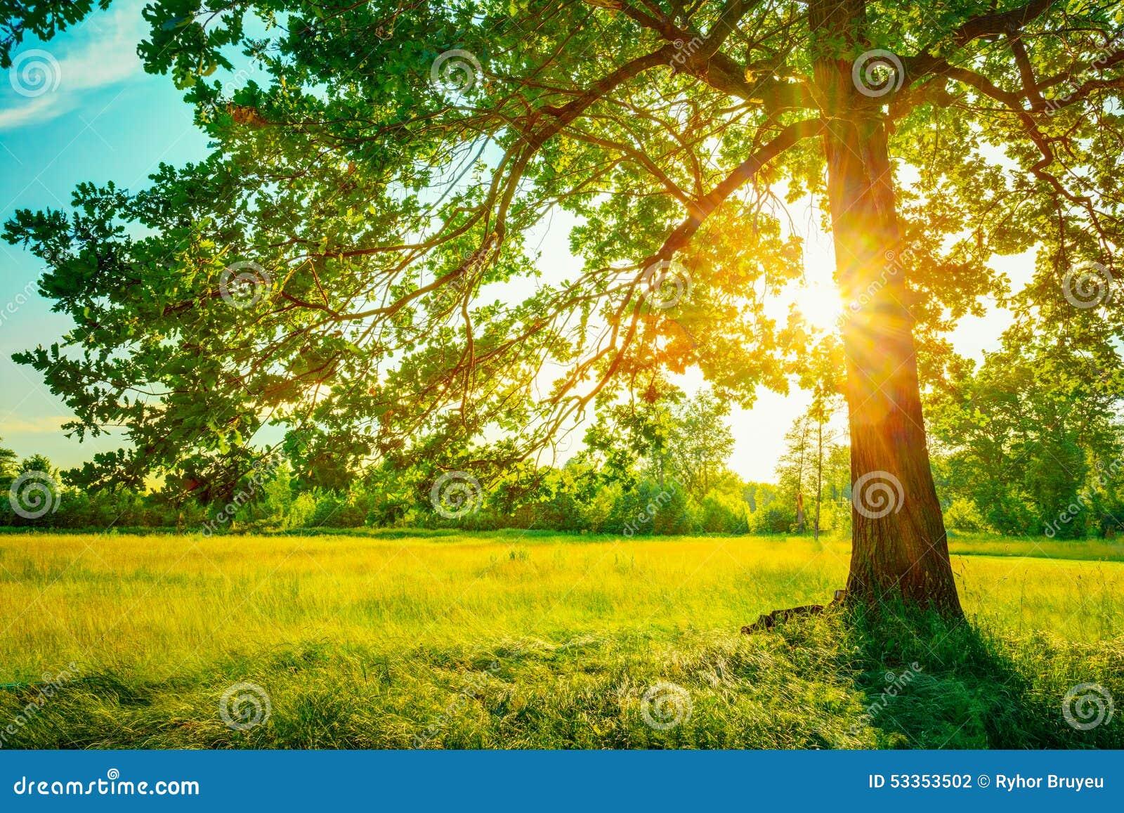Θερινά ηλιόλουστα δασικά δέντρα και πράσινη χλόη Φύση