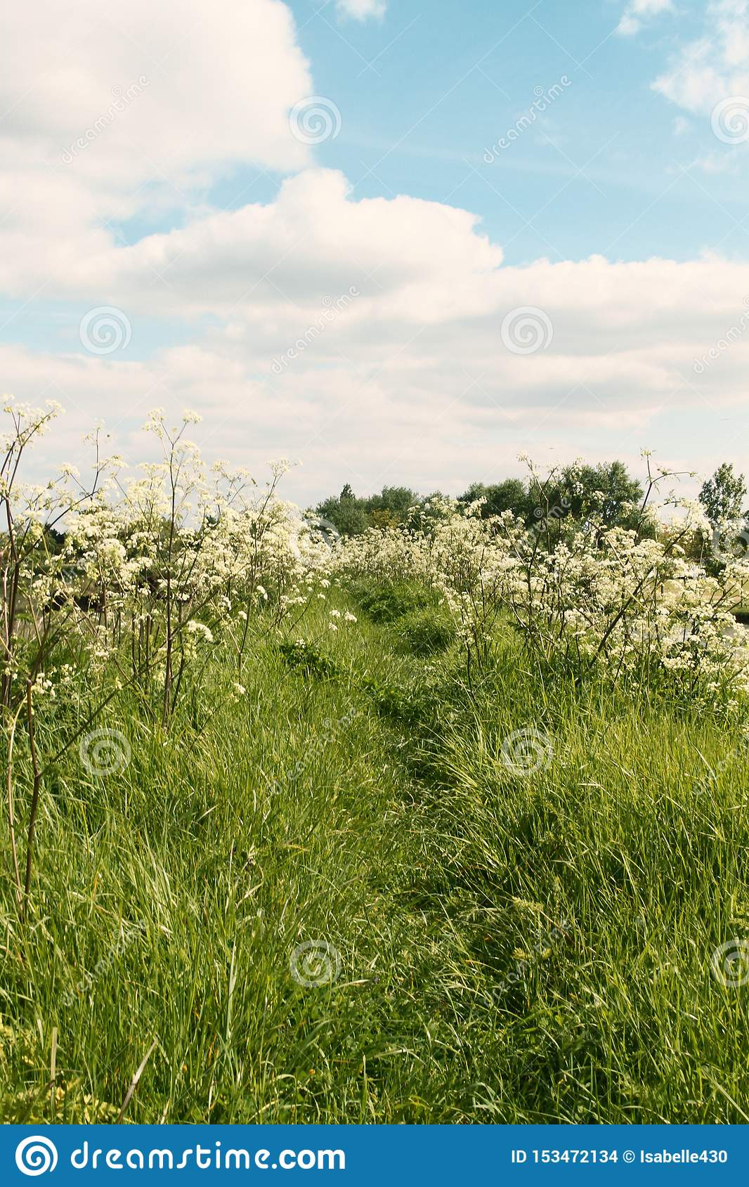 Θερινός τομέας με την πορεία και τα λουλούδια
