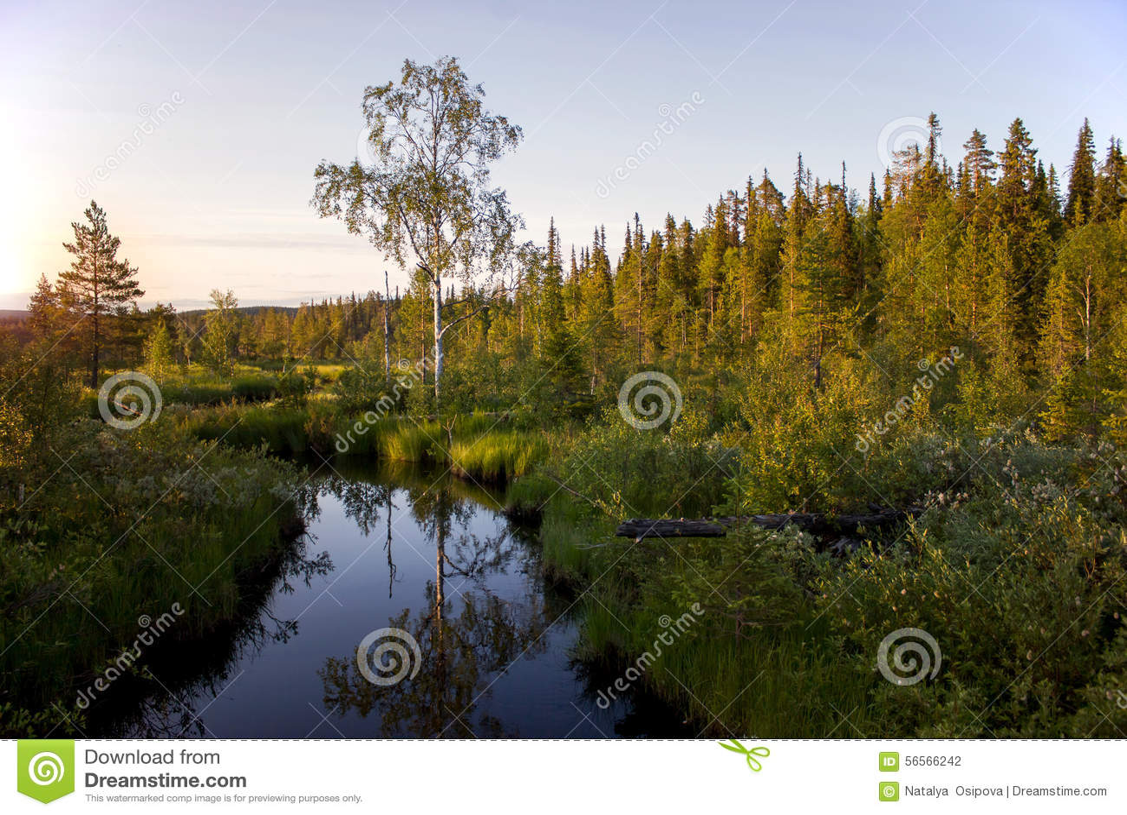 Download Θερινό ηλιοβασίλεμα στην καρελιανή δασική Ρωσία Στοκ Εικόνες - εικόνα από έδαφος, αλιεία: 56566242