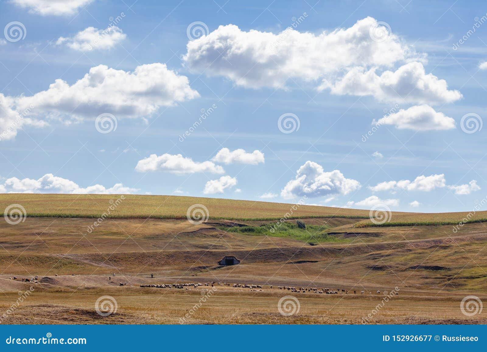 Θερινό τοπίο με το κοπάδι των προβάτων