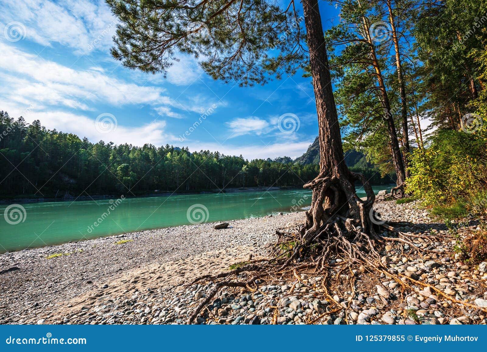 Θερινό τοπίο στον ποταμό Katun Altai, νότια Σιβηρία, RU