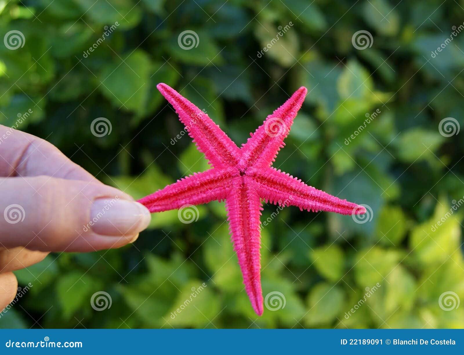 θηλυκός αστερίας εκμετ