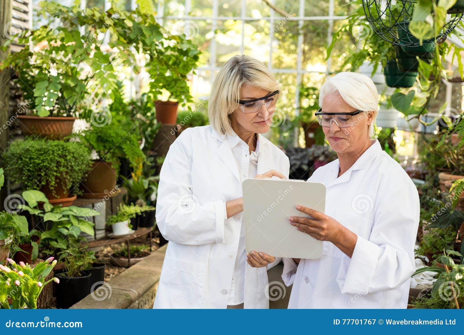 Θηλυκοί συνάδελφοι που εξετάζουν στην περιοχή αποκομμάτων το θερμοκήπιο