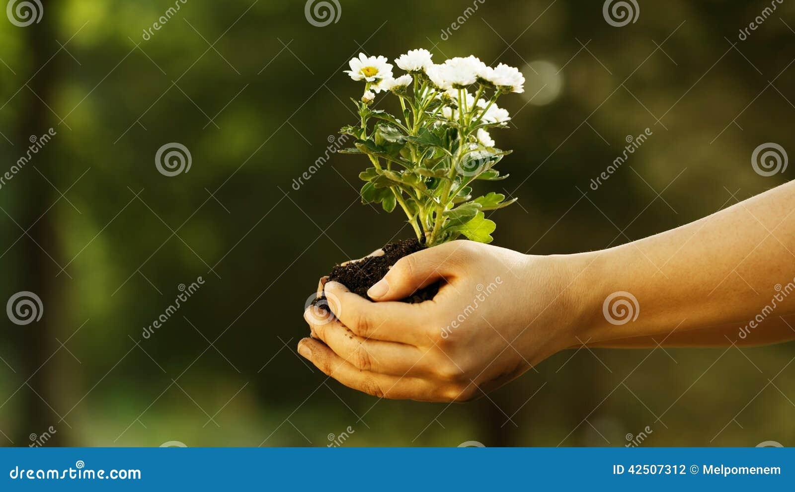 Θηλυκό χέρι που κρατά νέες εγκαταστάσεις