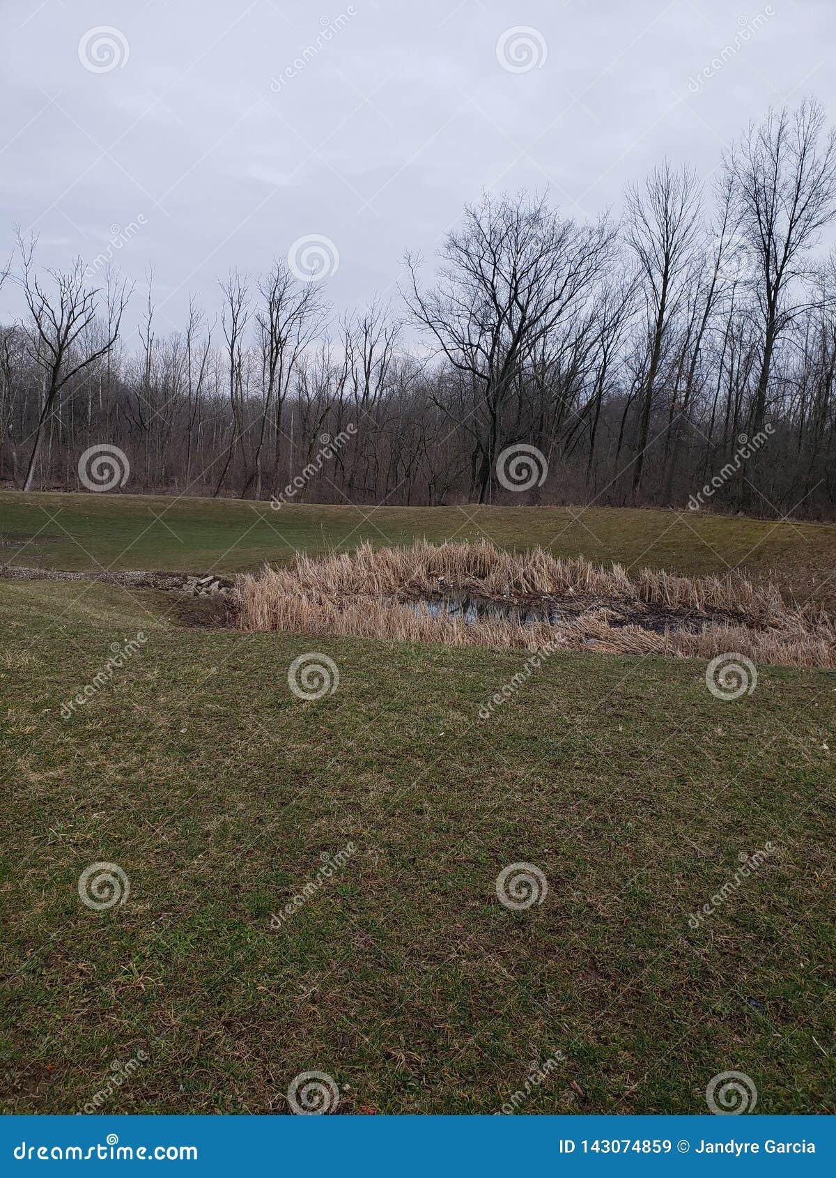 Θλιβερά Midwest ξύλα