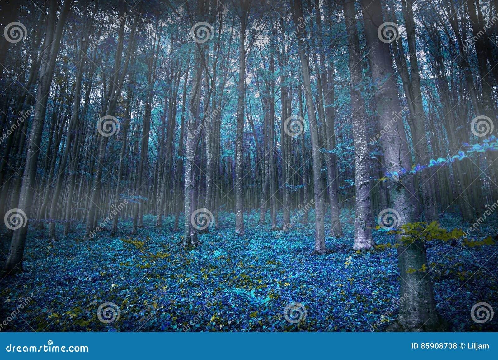 Θλιβερά υπερφυσικά ξύλα με τα φω τα και την μπλε βλάστηση, μαγική έκθεση