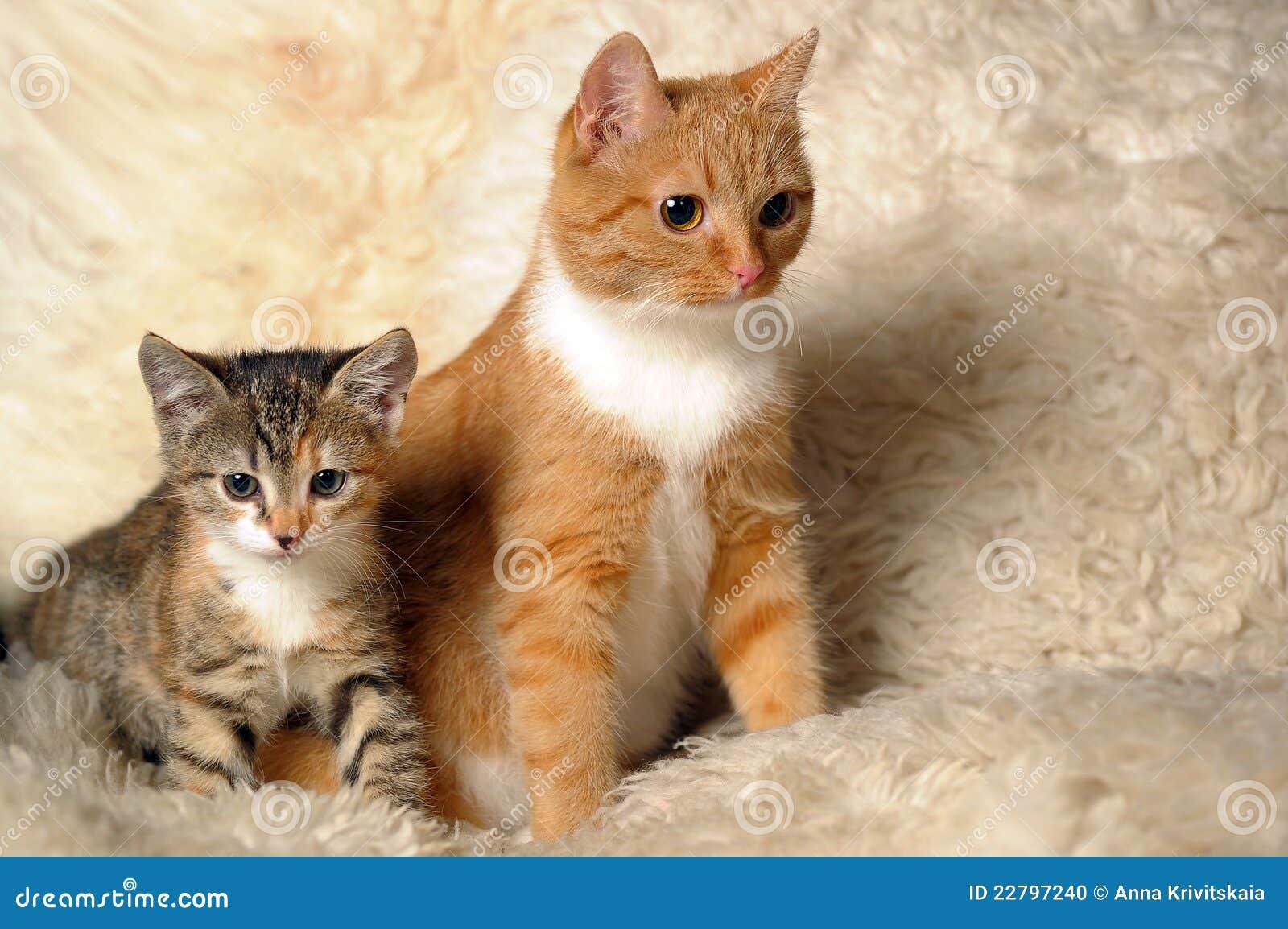 διάνυσμα γατακιών απεικόνισης γατών
