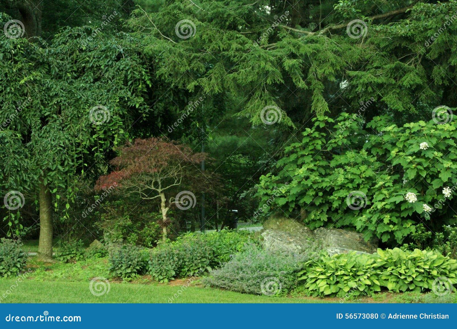 Download Ιαπωνικός σφένδαμνος στοκ εικόνες. εικόνα από τοπία, διακλαδιμένος - 56573080