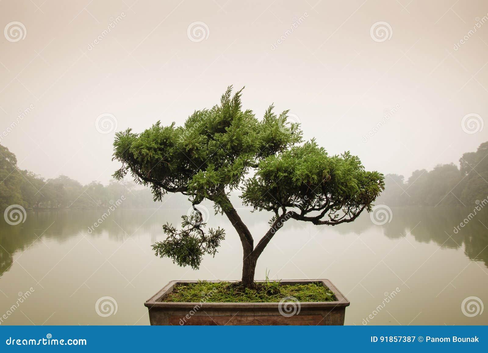 Ιαπωνικό δέντρο μπονσάι στο δοχείο στον κήπο zen