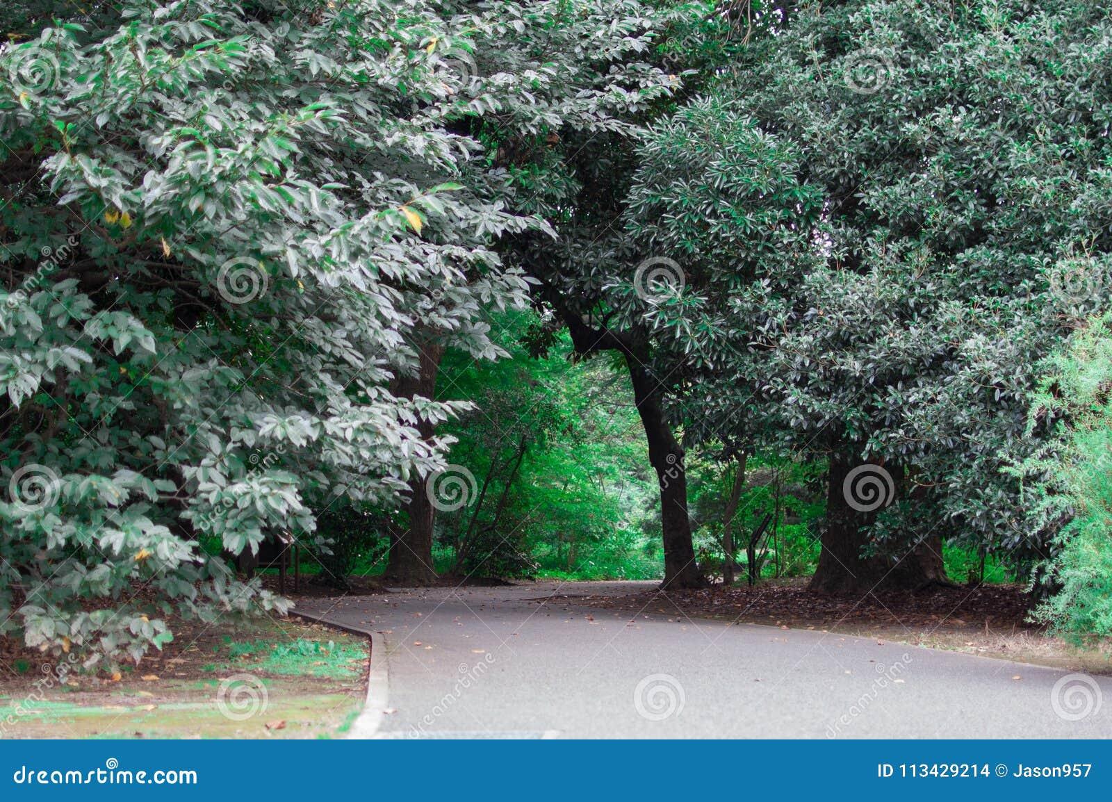 ιαπωνικό πάρκο Το καλοκαίρι είναι πολύ πράσινη εποχή της Ιαπωνίας Θερινή περίοδο του Κιότο είναι ο πολύ καλός συγχρονισμός για να