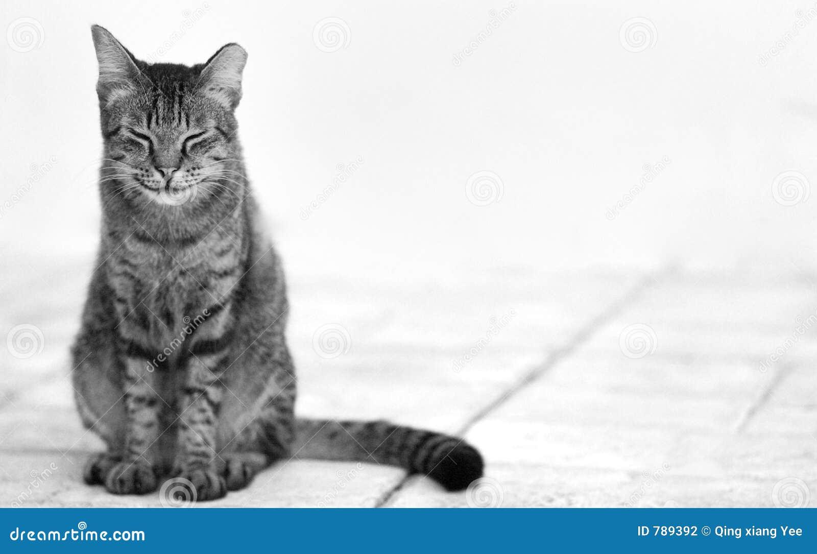 16d05970b90d γκρίζα ευτυχής ελαφριά μονοχρωματική συνεδρίαση πατωμάτων γατών ανασκόπησης  μαύρη που χαμογελά άσπρο υπόλευκο