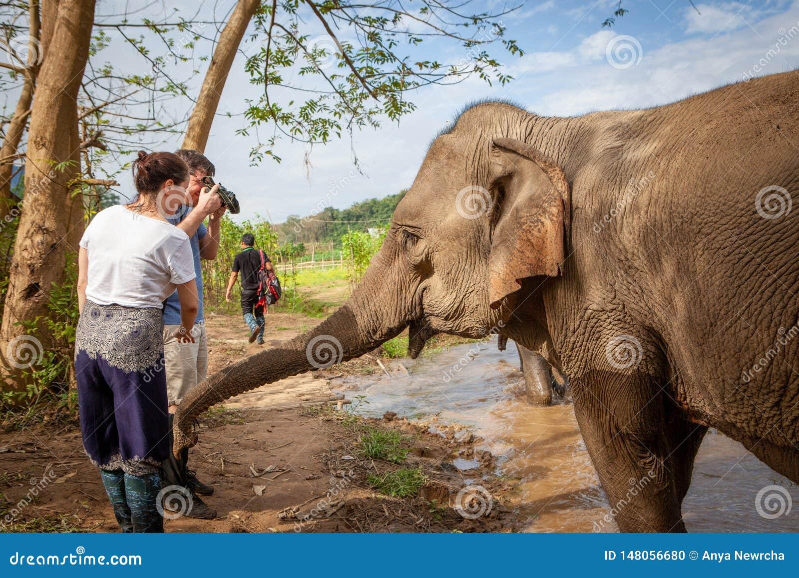 Ινδικός ελέφαντας σχετικά με τους τουρίστες με τον κορμό του Οι τουρίστες παίρνουν τις στενές επάνω φωτογραφίες Luang Prabang, Λά