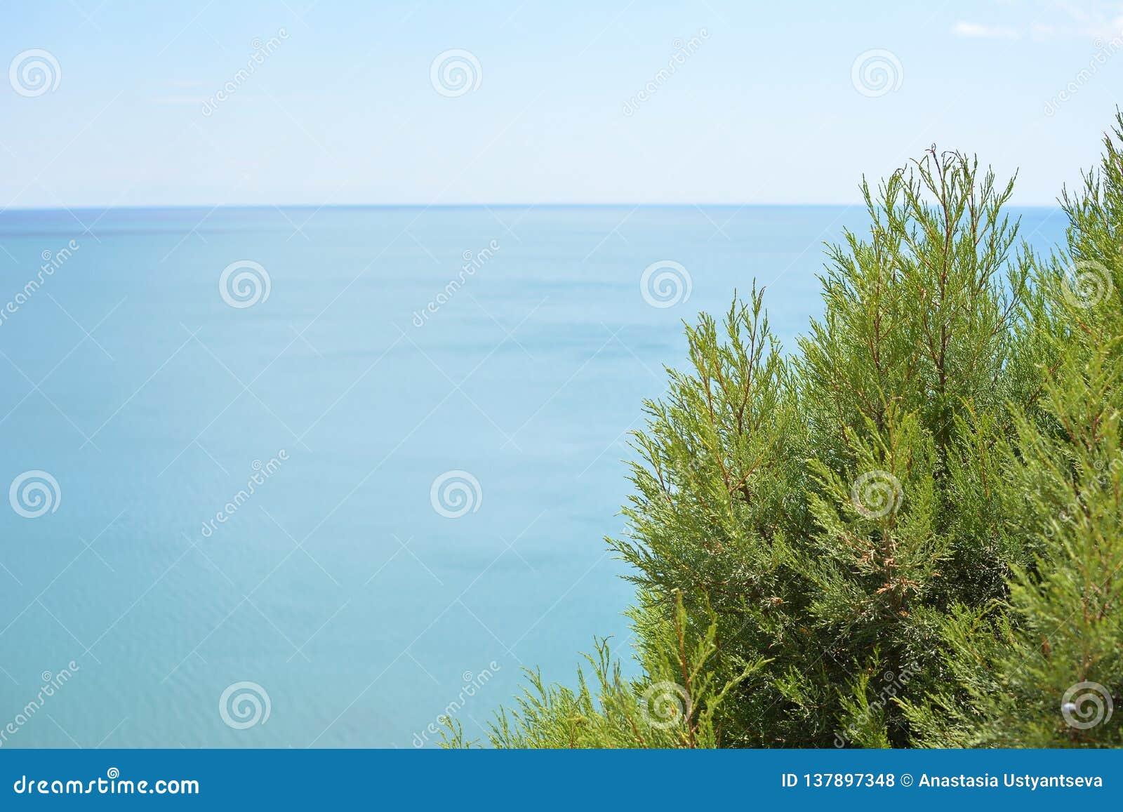 Ιουνίπερος στο υπόβαθρο της θάλασσας και του ουρανού