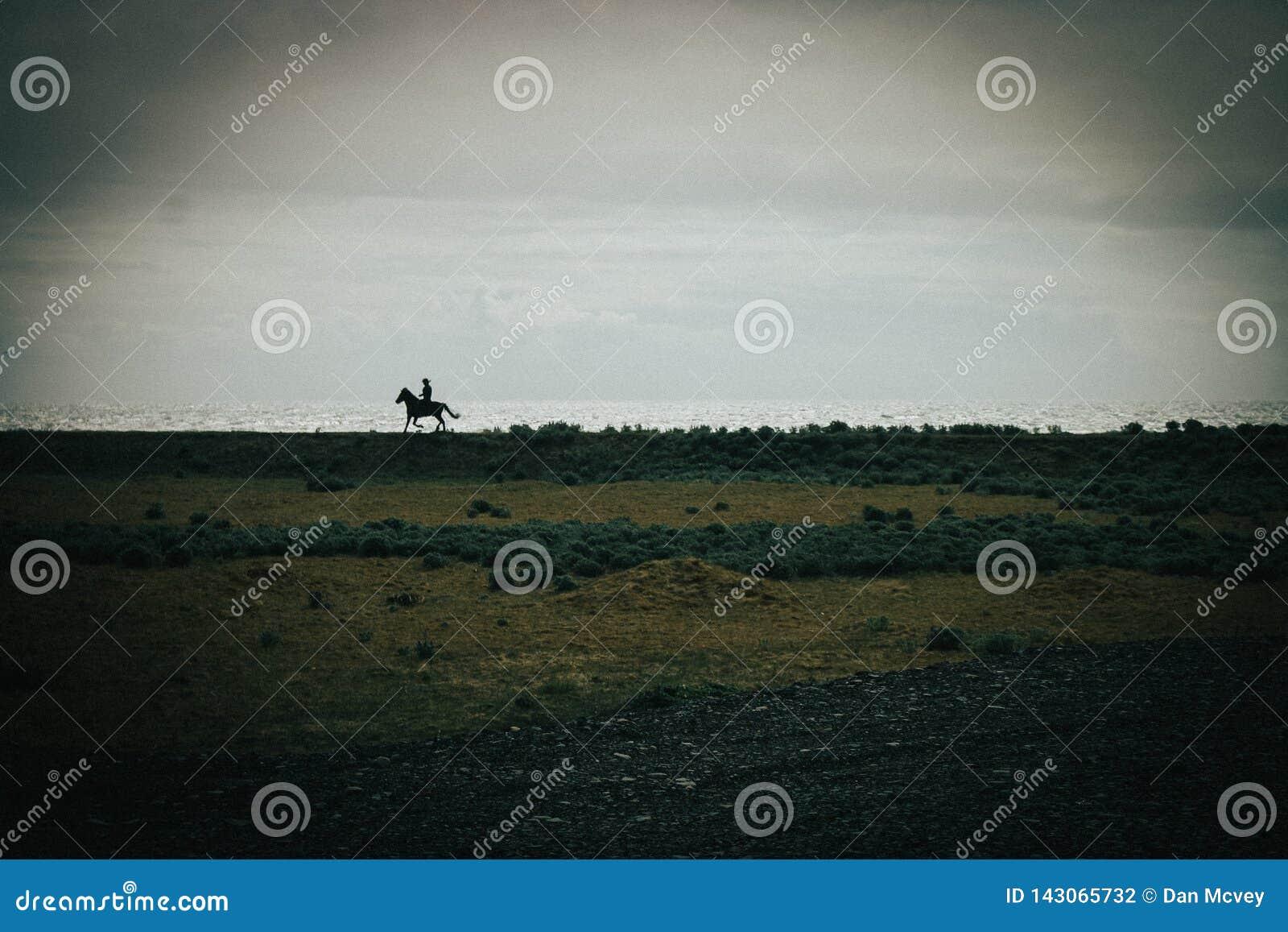 Ισλανδικός αναβάτης πλατών αλόγου στη μαύρη παραλία άμμου