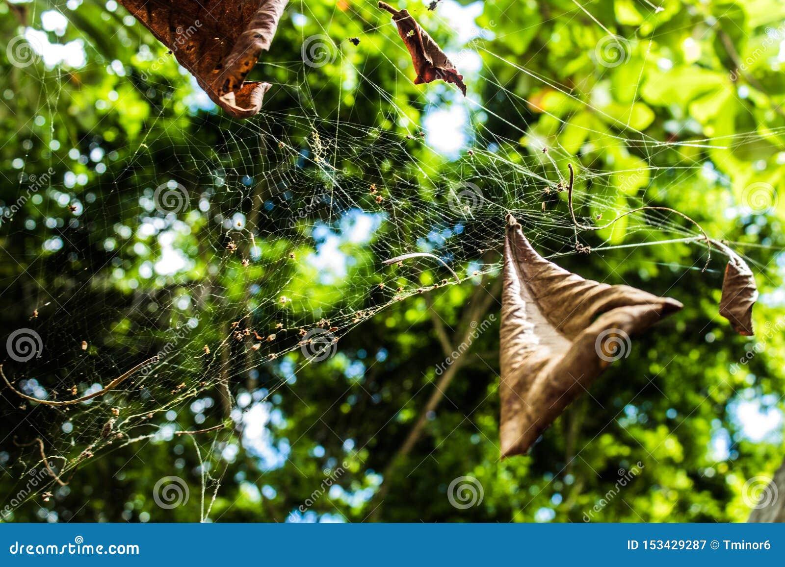 Ιστός αράχνης αραχνών με τα φύλλα και το ρύπο