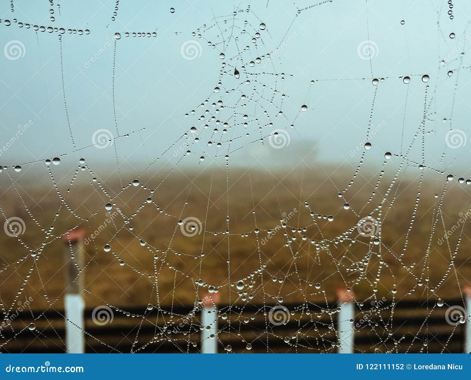 Ιστός αραχνών με τις πτώσεις βροχής