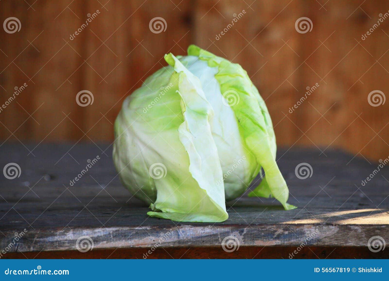 Download Ιταλικό άσπρο λάχανο στοκ εικόνα. εικόνα από απομονωμένος - 56567819